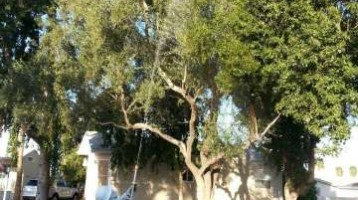 Tree Spraying in Phoenix