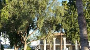 Pest Control in Phoenix