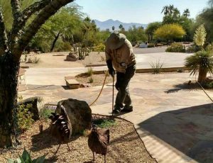 deep root fertilization in Paradise Valley, AZ